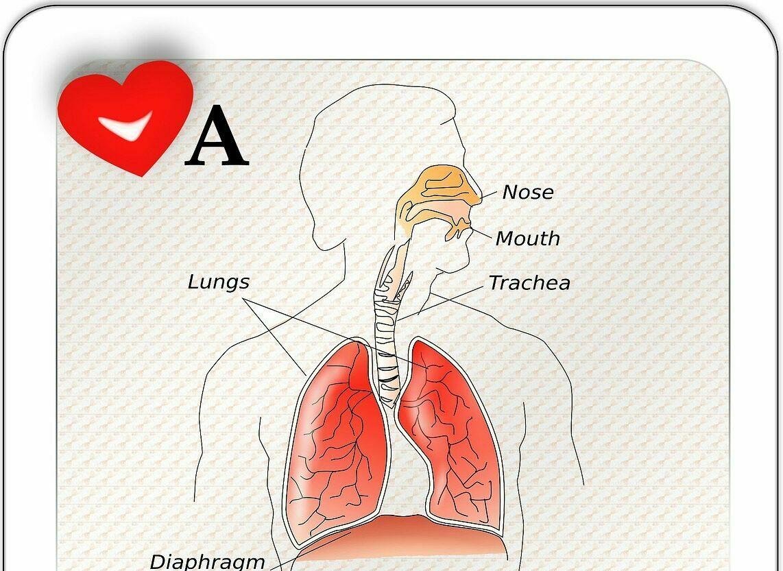 prawidłowy oddech